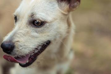 feliz pra cachorro