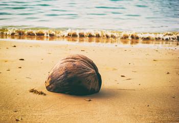 Coconut on the beach, tropical island scene