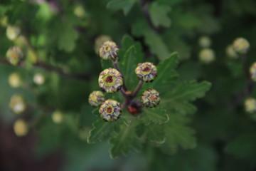 blume, pflanze, natur, green, sommer, garden, frühling, blatt, makro, bud, gras, flora, wiese, pink, obst, blühen, rot, lila, aufblühen, insecta, ast, busch