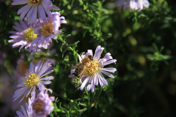 blume, natur, bees, pflanze, lila, green, sommer, garden, pink, insecta, aufblühen, wild, makro, flora, frühling, blühen, floral, honig, lavendel, schön, blütenstaub, feld, blatt