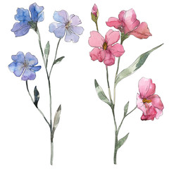 Pink and purple flax floral botanical flower. Watercolor background set. Isolated flax illustration element.