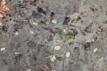 Muddy asphalt debris leaves rain pavement surface texture