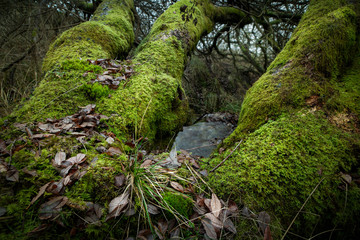 Winter Woodland Landscape