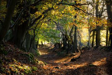 Autumnwoodland landscape