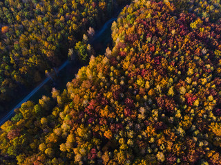 Aerial view of autumn colored forest. dirt road Drone shot bird eye. Natural pattern in top down aerial view over the forest. green and yellow, treetops at sunset, copy space