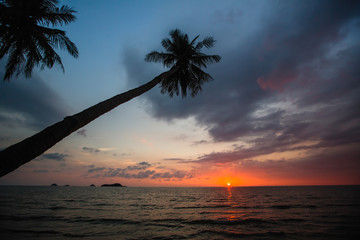 Palm trees on a tropical sea beach during sunset.