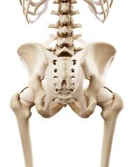 Illustration of the human hip bones
