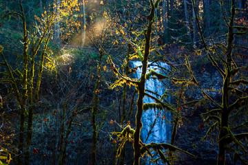 Sun Shining through trees at waterfall