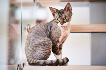 Photo of a cat breed sphinx sitting on stairs.
