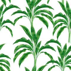 Watercolor painting green,banana leaves seamless pattern on white background.Watercolor hand drawn illustration palm leaf,tree tropical exotic leaf for wallpaper textile vintage Hawaii aloha style