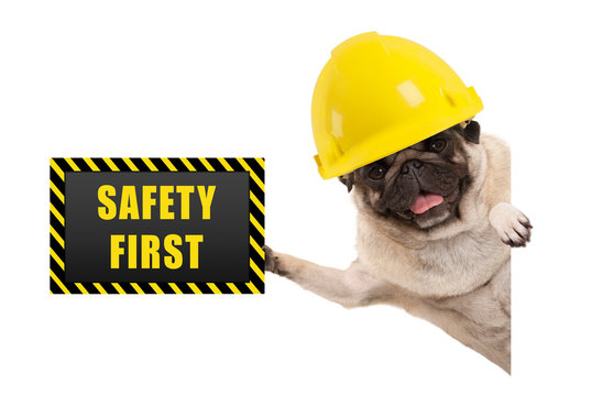 frolic smiling pug puppy dog with yellow constructor helmet, holding up black and yellow safety first sign board, isolated on white background