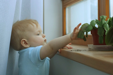 First year baby boy discovers world and crashes unsafety placed plant on the floor