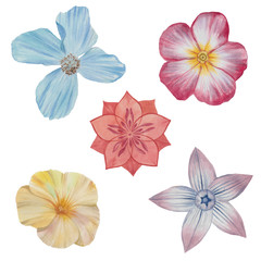A set of flowers. Hand draw watercolor illustration..Watercolor painting set of five flowers isolated on white. Design element..