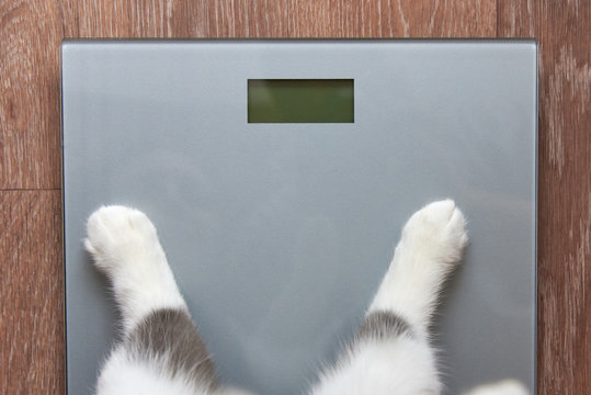 Paws of a cat stand on measuring scales, close-up