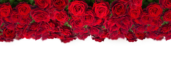 bouquet of dark  red roses  close up