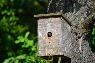 Young starling in the nestbox. Fauna of Ukraine.