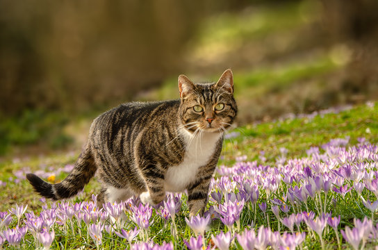 ältere Katze auf Raubzug