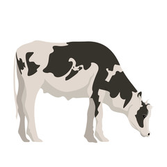 Isolated cute cow image. Vector illustration design