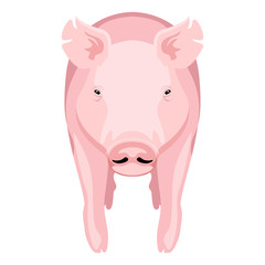 Front view of a pig. Farm animal. Vector illustration design