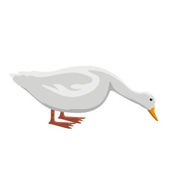 Isolatesd cute duck image. Vector illustration design