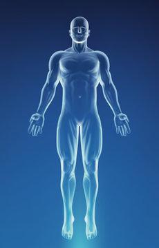 Blue Human Anatomy Body