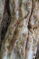 Ecorce d'arbre