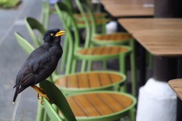 Oiseau noir et jaune sur une chaise verte