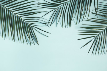 Summer composition. Tropical palm leaf on pastel blue background. Summer concept. Flat lay, top view, copy space