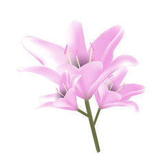 Bouquet of pastel pink lilies.