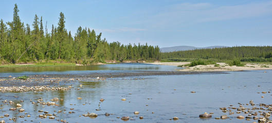 Summer panorama of the taiga river in the Polar Urals.