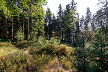 Forest Kobernausser Wald, Upper Austria