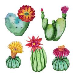 Watercolor handpainted set of blossom cactus plants