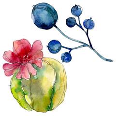 Succulent floral botanical flower. Watercolor background illustration set. Isolated succulents illustration element.