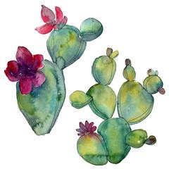 Green cactus floral botanical flower. Watercolor background illustration set. Isolated cacti illustration element.