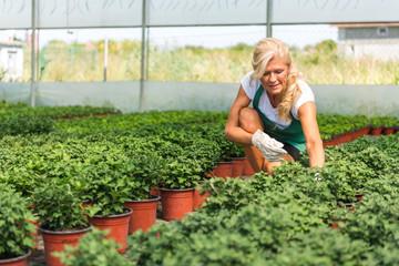 Senior women working at greenhouse