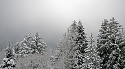 Snow covered trees line a pathway in a alpine forest in the valley of chamonix in the French Alps. The trees bend over under the weight of new fallen snow.
