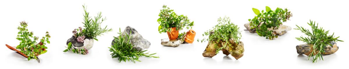 Fototapeta Marjoram, oregano, rosemary garden herbs set obraz