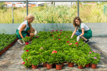 Florists working in greenhouse