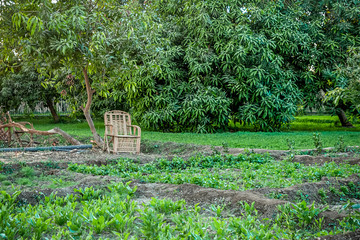 .empty wooden chair for rest on the plantation