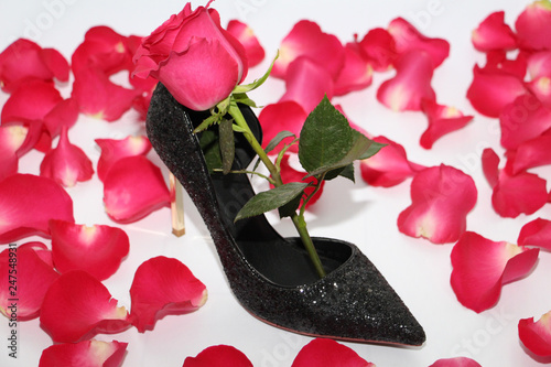 9a5116419de Pink rose in a female shoe. Black shoes with high heels. Rose next to a black  shoe.