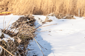 Background texture of the dry reeds on the shore of the lake