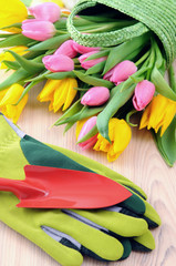 Bunch of Tulips in green basket. table with garden gloves and shovel