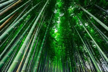 Wall Mural - The Bamboo Forest of Arashiyama, Kyoto, Japan