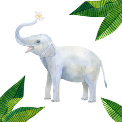 Indian cute baby elephant holds a white flower: frangipani or plumeria and green tropical leaves. Hand drawn watercolor illustration. Isolated on white background.