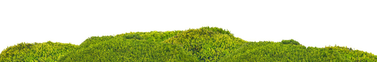 isolated green moss stripe