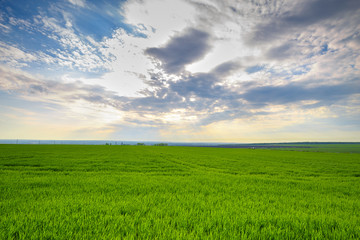 Wall Mural - rural landscape, green field grass with a blue sky and clouds