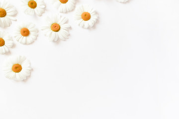 Photo sur Plexiglas Marguerites White chamomile flowers