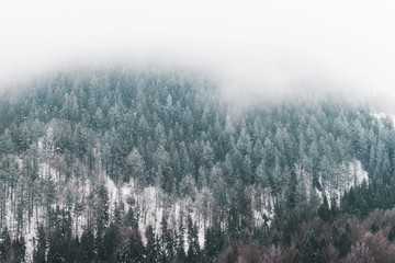 mountain top with foggy clouds and pine trees