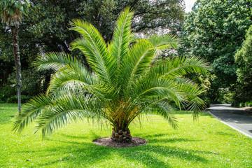 Photo sur cadre textile Palmier Palmeira