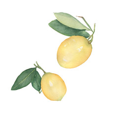Set of Lemons  isolated on white background. Hand drawn watercolor illustration.Fresh lemon with green leaves. Food element for your design.